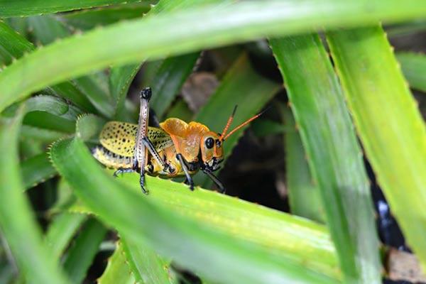 Destructive Garden Insects